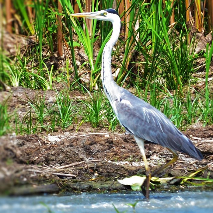 Danube Delta - for bird watching lovers and everyone else - PRIVATE TOUR in 3 days