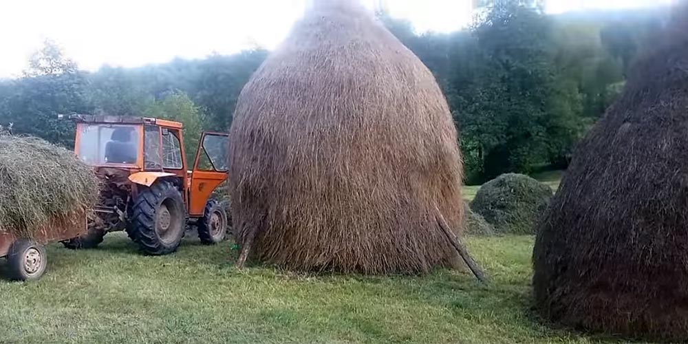 The making of haystack in Maramures